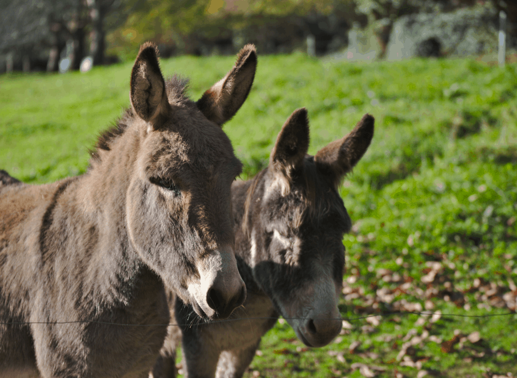 Say hi to some of the donkeys at the Spitalfields City Farm in London.