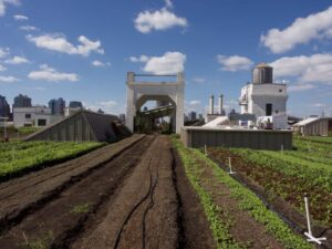 The beautiful rooftop farms you'll find at Brooklyn Grange Farms and Apiary (image sourced from Flickr.com).