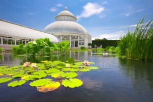 The beautiful water lily pond you'll find at the New York Botanical Gardens in the Bronx.