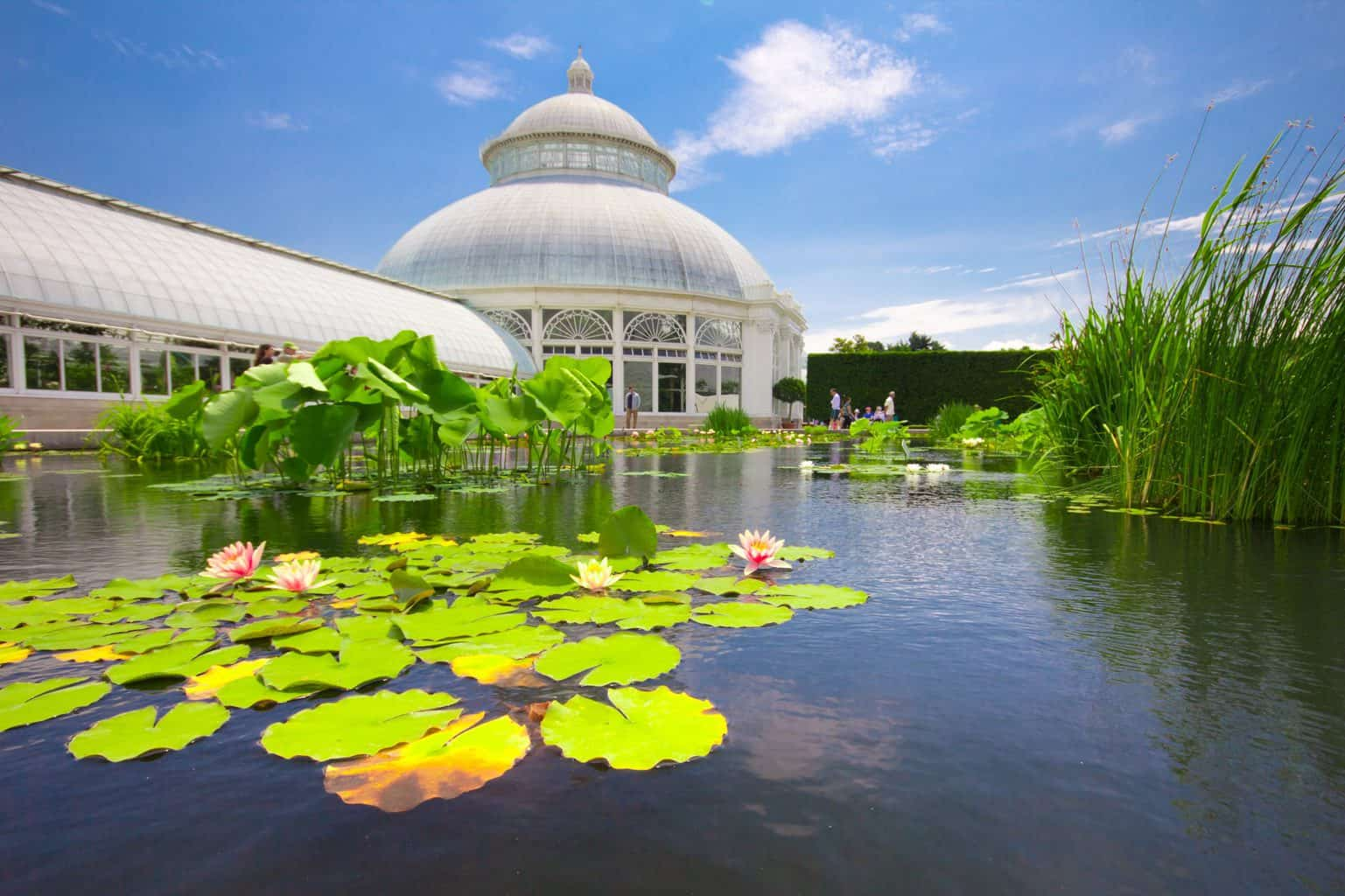 A stunning view of some of the greenhouses you'll find at the New York Botanical Gardens