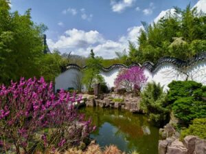The quiet beauty of the Chinese Scholar's Garden in Staten Island, New York City.