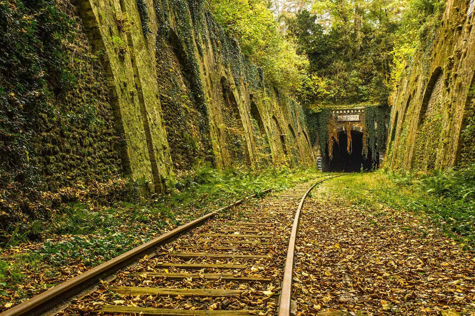 A section of the abandoned Petite Ceinture railway track, one of the many hidden gems in Paris.