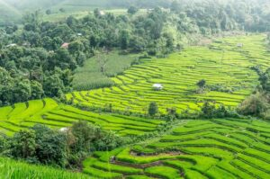 Some of the amazing rice terraces that you'll find throughout the countryside near Chiang Mai, Thailand.