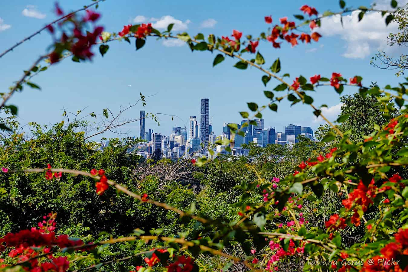 A view of the Brisbane skyline from the Brisbane Botanic Gardens at Mount Coot.