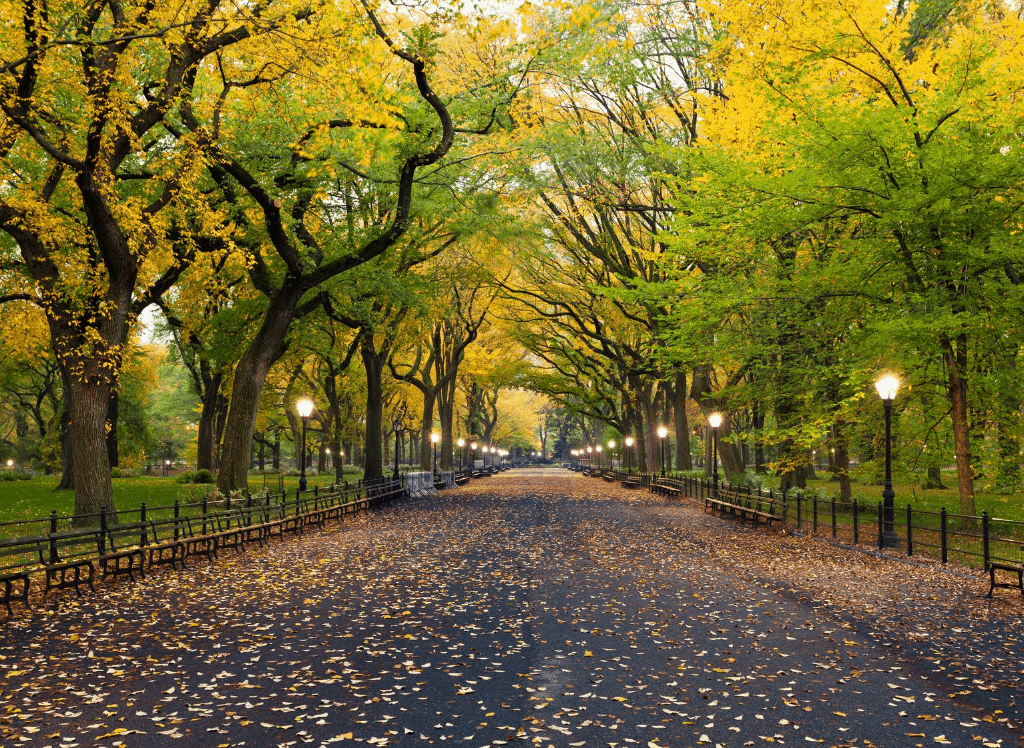 One of the most romantic things to do in NYC to take a picturesque walk through Central Park.