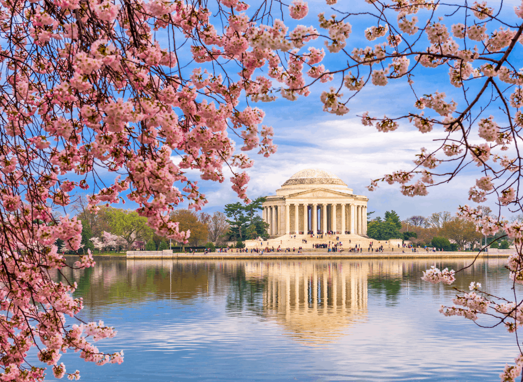 The Jefferson Memorial surrounded by cherry blossoms at the Tidal Basin in Washington DC.
