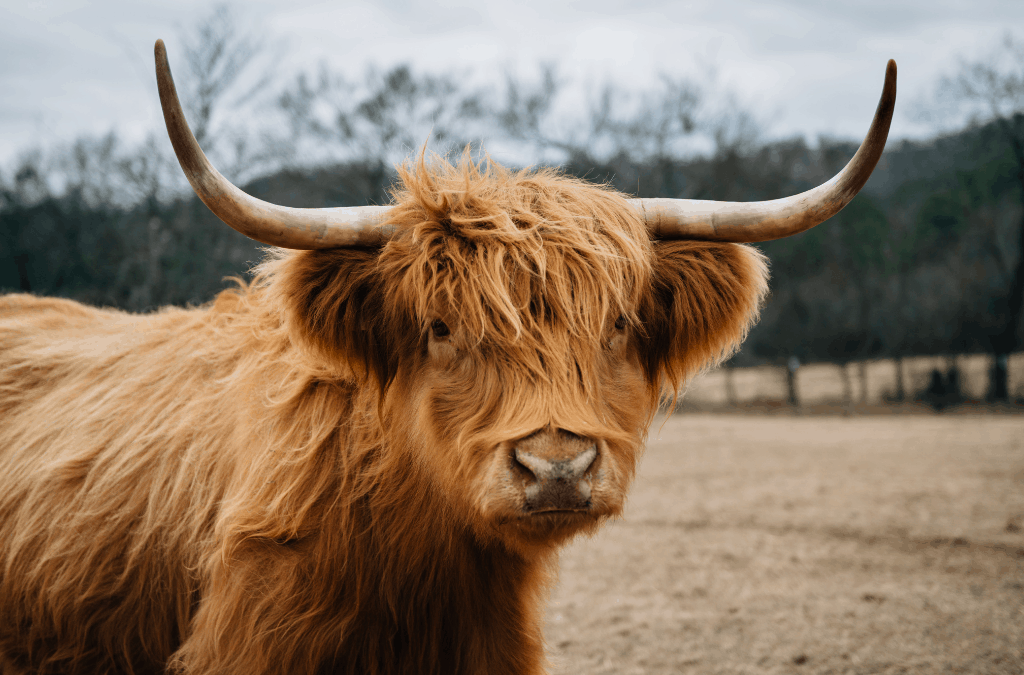 6 Tips for a Terrific Vacay in Bonnie Scotland