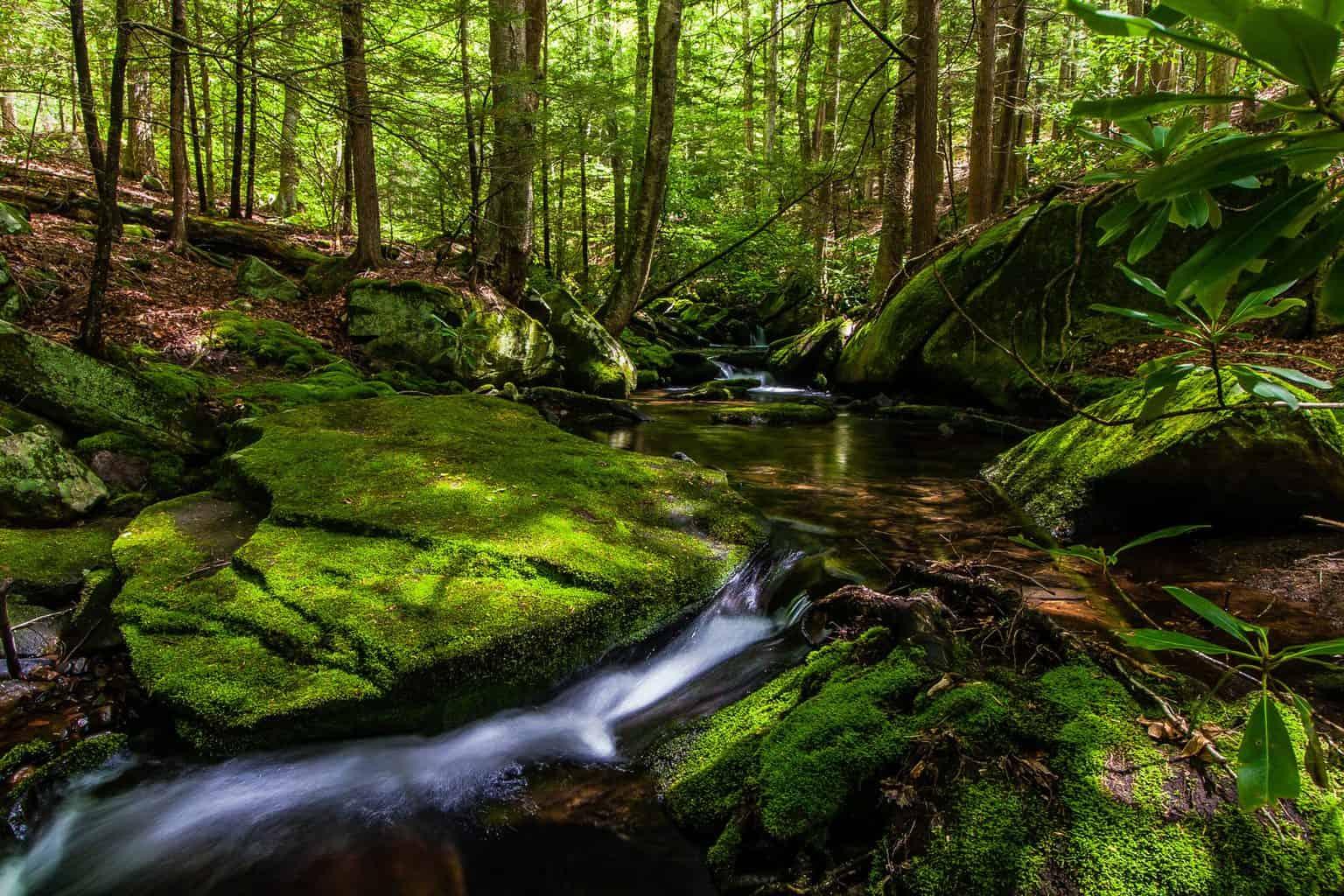 A beautiful stream in the Catskills of NY.
