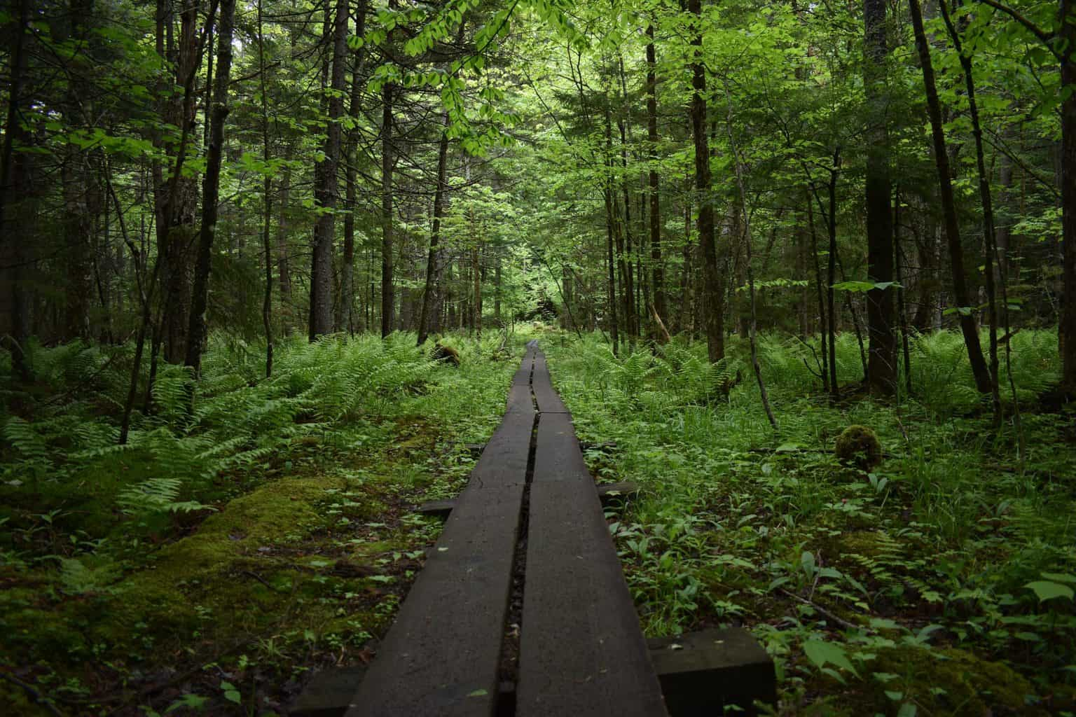 View of one of the best hiking trails in upstate New York.