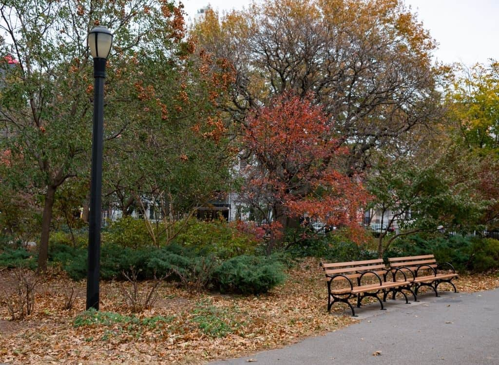 Benches, a street lamp, and fall foliage in McCarren Park in Brooklyn.
