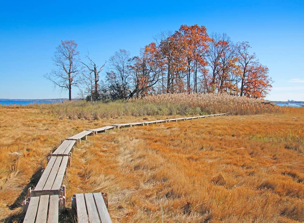 A salt marsh and empty boardwalk in Pelham Bay Park in the Bronx.