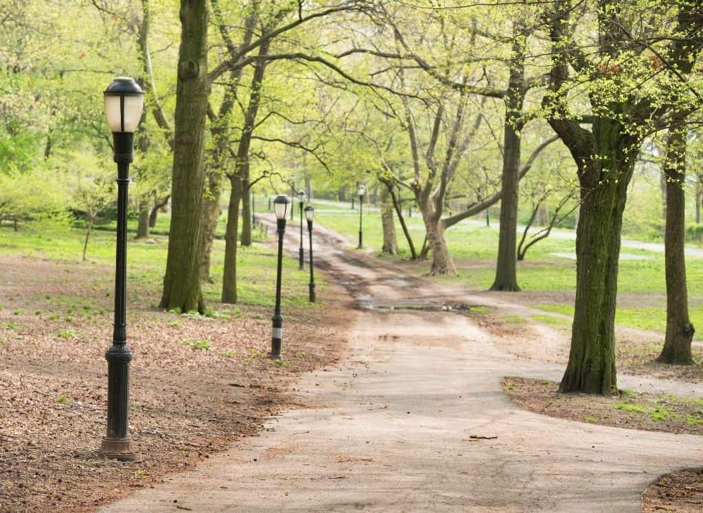 Some of the beautiful tree-lined paths you'll find in Riverside Park.