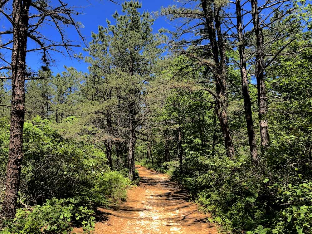 A Path Through the Forest at Brookhaven State Park.