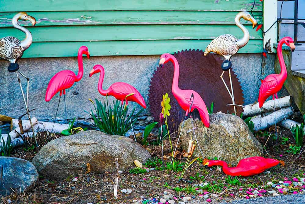 Quirky pink flamingos outside of cafe Miranda