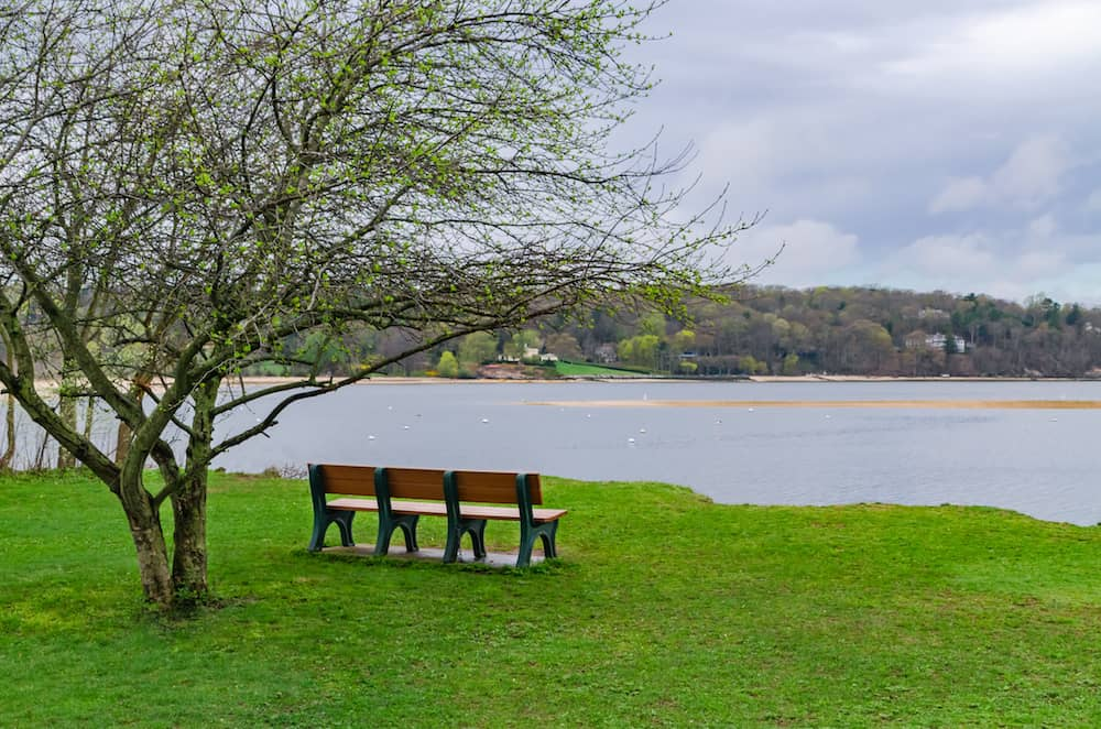 An empty bench next to an isolated tree with scenic view in Cold Spring Harbor State Park Long Island.