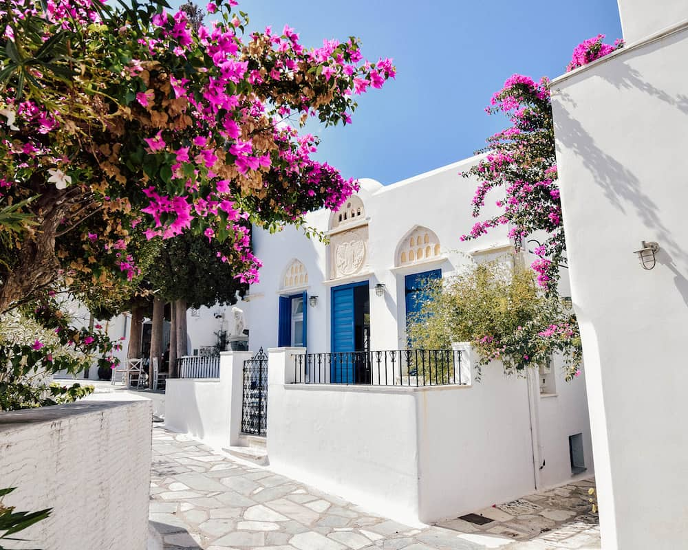 The whitewashed buildings of Tinos that are surrounded by pink flowers.