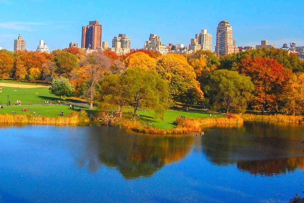 Fall foliage in NYC