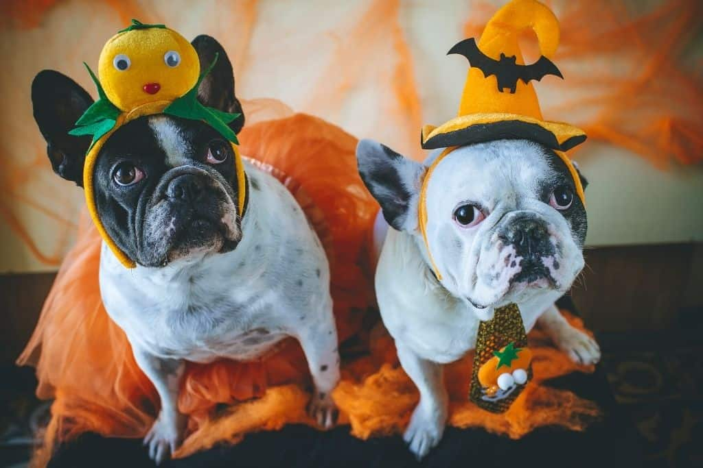Dogs dressed in cute halloween costumes