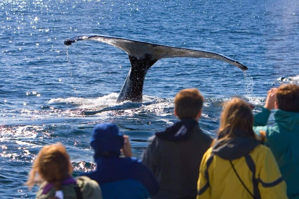 Crowds watching a whale sink beneath the water,
