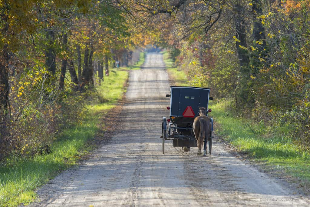 Amish Buggy with Horse in Tow in Rural New York on Fall day.