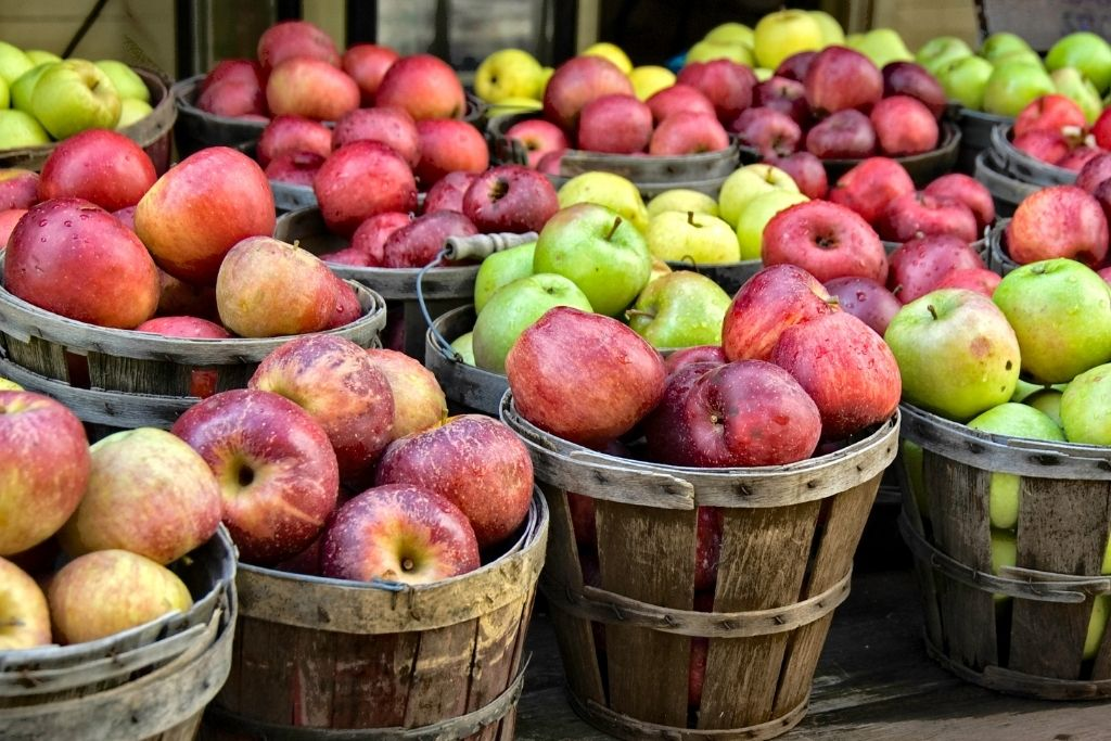 Bushels of freshly picked red and green apples that you'll find in Vermont in the fall.