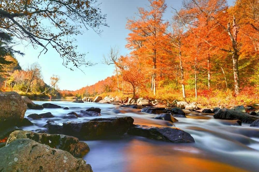 New York fall foliage in the Adirondacks by a local stream.