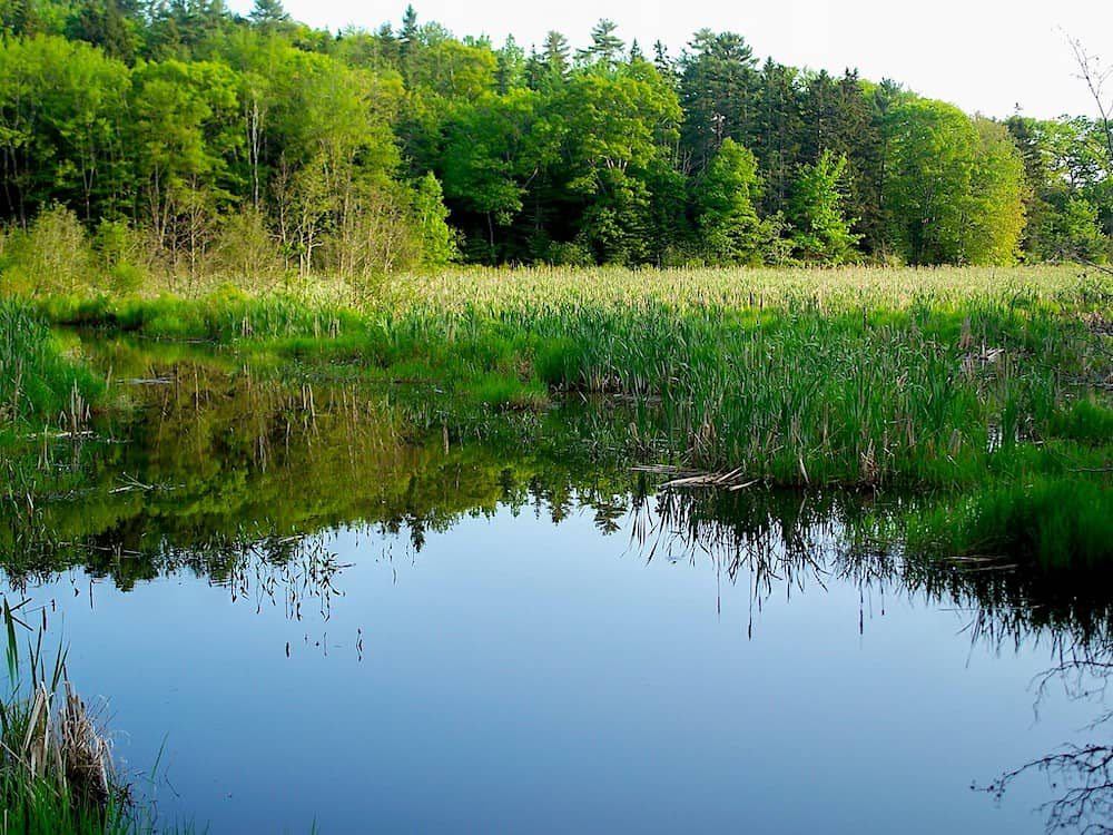 Pong and ever-green forests of Penny Lake Preserve in Boothbay Harbor.