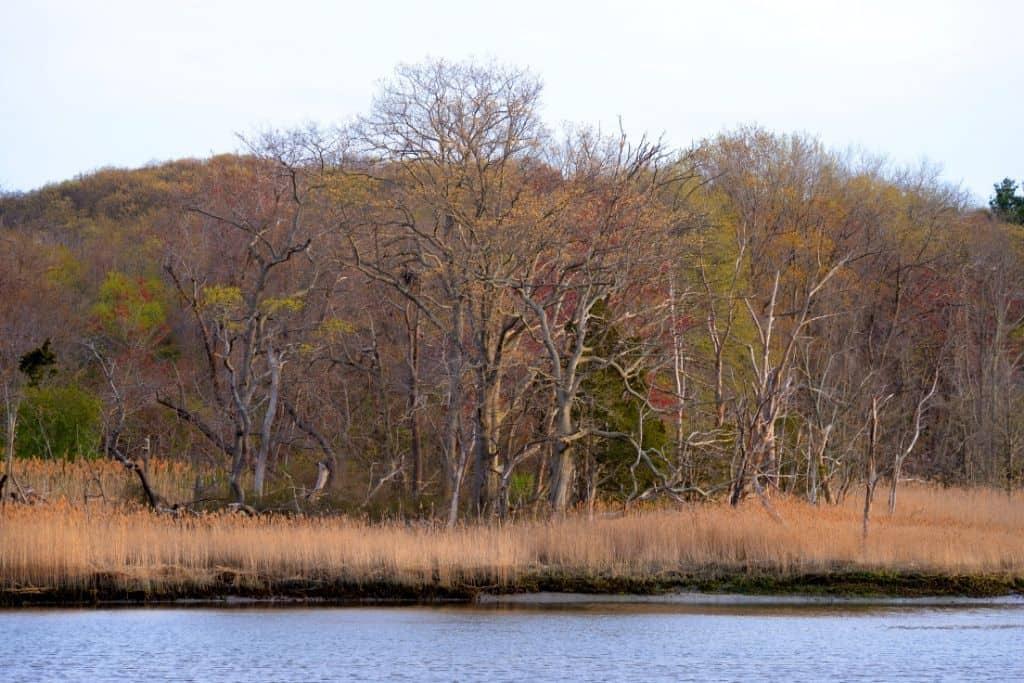 Fall foliage along the wetlands of Sunken Meadow State Park in Long Island.