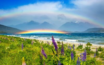 200+ Rainbow Quotes to Brighten Your Day!