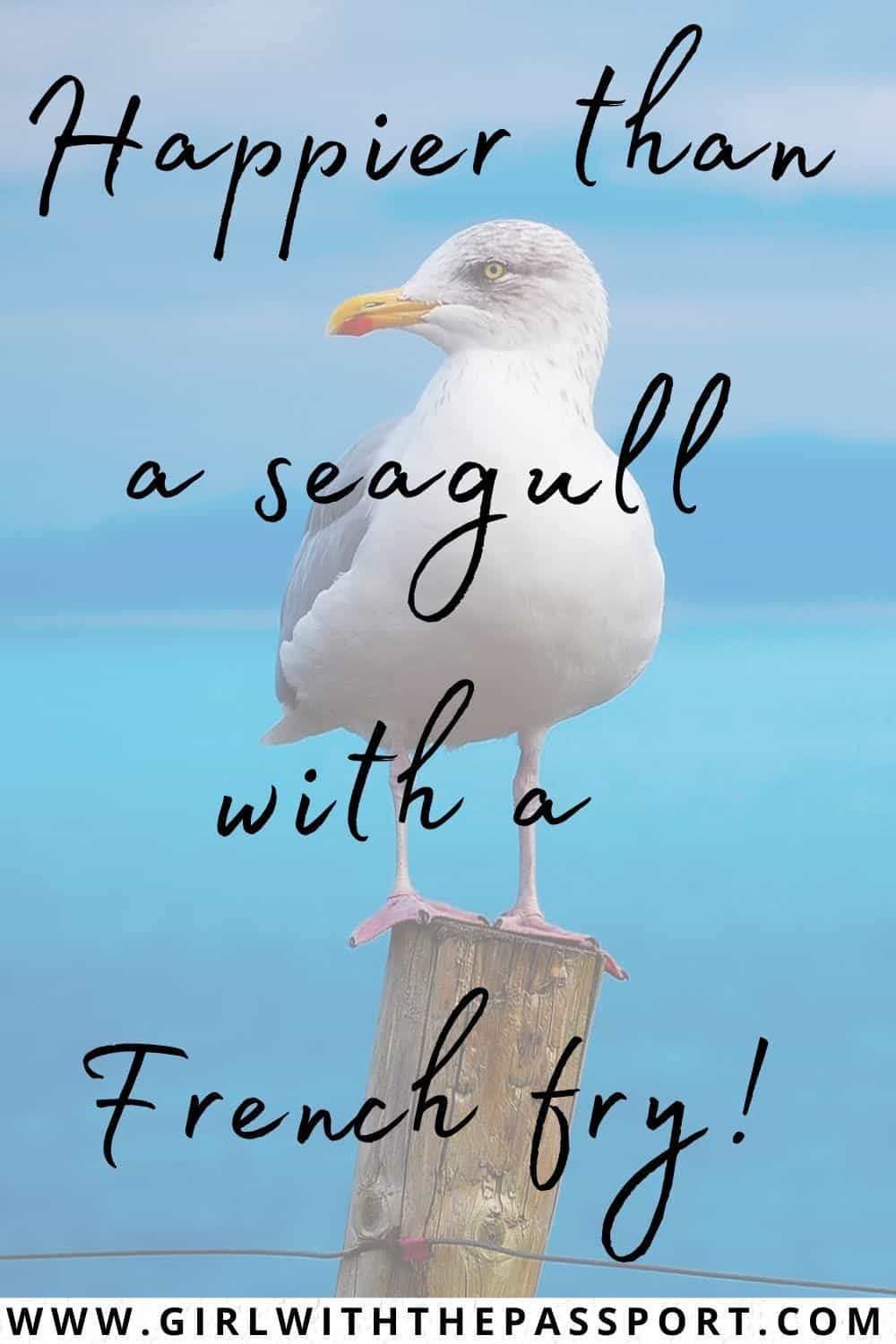 Best Sea Puns and Funny Sea Quotes